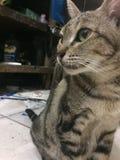 逗人喜爱的孤独的猫 免版税库存图片