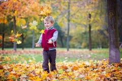 逗人喜爱的学龄前孩子,男孩,使用与叶子在公园, autu 库存图片