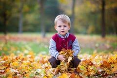 逗人喜爱的学龄前孩子,男孩,使用与叶子在公园, autu 库存照片