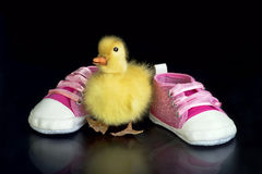 逗人喜爱的宝贝鸭子 图库摄影