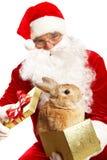 逗人喜爱的宠物圣诞老人 库存照片