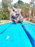 逗人喜爱的宠物猫 免版税图库摄影