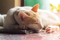逗人喜爱的家猫 库存图片