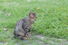 逗人喜爱的家猫 库存照片