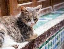 逗人喜爱的家养的小猫 免版税库存图片