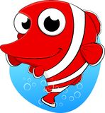 逗人喜爱的小丑鱼 免版税库存图片