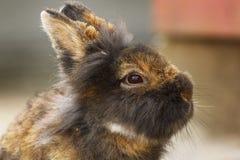 逗人喜爱的小兔子画象 库存照片