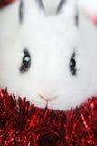 逗人喜爱的小兔子红色的丝带 库存图片