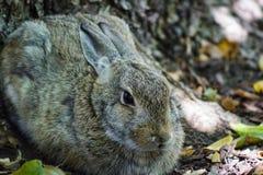 逗人喜爱的小兔的充分的身体画象 免版税图库摄影