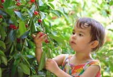 逗人喜爱的小女孩在庭院里采樱桃 图库摄影