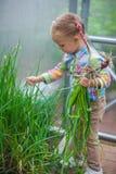 逗人喜爱的小女孩收集在的庄稼葱 免版税库存照片