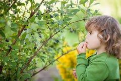 逗人喜爱的小孩女孩吃忍冬属植物户外 库存图片
