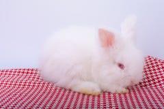 逗人喜爱的小桃红色红色在红色条纹布料的眼睛白色兔子逗留有白色背景 库存图片