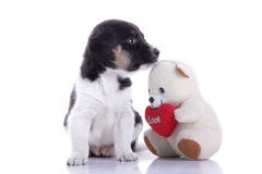 逗人喜爱的小狗和女用连杉衬裤 图库摄影