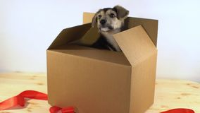 逗人喜爱的小狗爬行有红色丝带的邮费箱子 库存照片