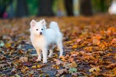 逗人喜爱的小狗白色 免版税库存照片