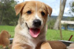 逗人喜爱的小狗纵向 免版税库存照片