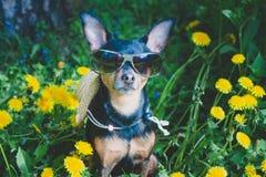 逗人喜爱的小狗,在春天黄色颜色的狗在一个开花的草甸,狗的画象 免版税库存图片