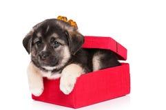 逗人喜爱的小狗 图库摄影