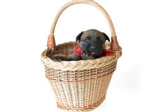 逗人喜爱的小狗 免版税库存图片