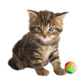 逗人喜爱的小猫。 免版税库存图片