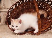 逗人喜爱的小猫一点 库存照片