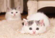 逗人喜爱的小猫一点 免版税图库摄影