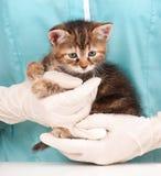 逗人喜爱的小猫一点 库存图片