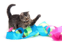 逗人喜爱的小猫丝带平纹 库存照片