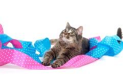 逗人喜爱的小猫丝带平纹 免版税库存图片