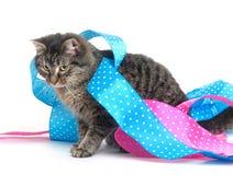 逗人喜爱的小猫丝带平纹 免版税图库摄影