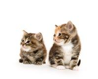 逗人喜爱的小猫二 免版税库存图片