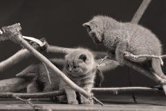 逗人喜爱的小猫升级有些分支 库存图片