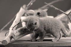 逗人喜爱的小猫升级有些分支 库存照片
