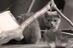 逗人喜爱的小猫升级有些分支 图库摄影