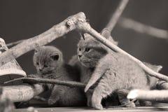 逗人喜爱的小猫升级有些分支 免版税库存图片