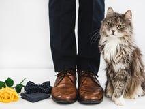 逗人喜爱的小猫和人` s腿 免版税库存照片