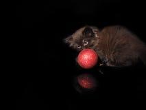 逗人喜爱的小猫和红色圣诞节球在黑背景 免版税库存照片