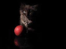 逗人喜爱的小猫和红色圣诞节球在黑背景 免版税库存图片