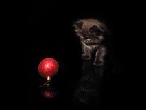 逗人喜爱的小猫和红色圣诞节球在黑背景 库存照片