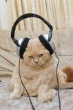 逗人喜爱的小猫和耳机 免版税库存照片