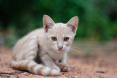 逗人喜爱的小猫坐地面在庭院里 图库摄影