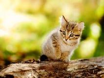 逗人喜爱的小猫室外本质上 免版税库存照片