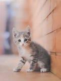 逗人喜爱的小猫平纹 库存照片