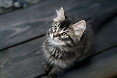 逗人喜爱的小猫平纹 免版税库存图片