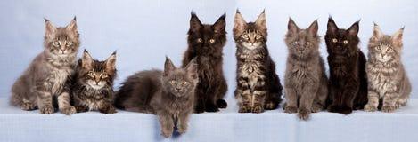 逗人喜爱的小猫废弃物  免版税图库摄影