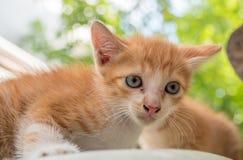 逗人喜爱的小猫戏剧在庭院里 库存图片