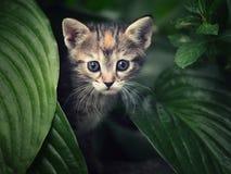 逗人喜爱的小猫本质上 免版税库存照片