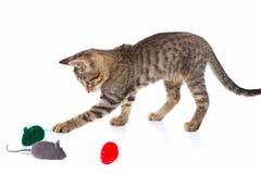 逗人喜爱的小猫演奏与在白色背景的一只红色,灰色和绿色玩具老鼠 免版税库存图片
