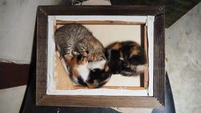 逗人喜爱的小猫睡觉 免版税库存照片